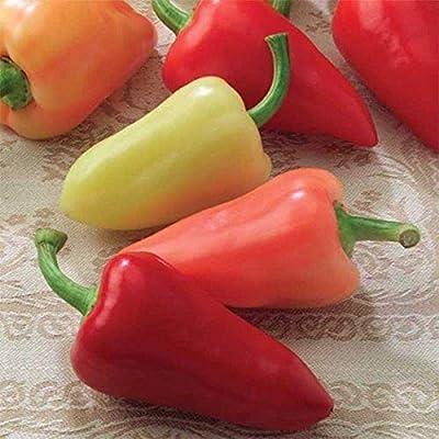 Mariachi F1 Hybrid Hot Pepper Seeds (25 Seeds) : Garden & Outdoor