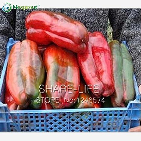 100 semillas / paquete siembra gigante pimienta dulce, Fácil ...