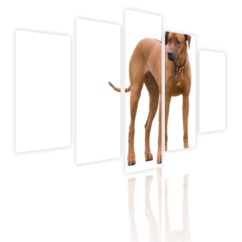 Alonline Art - Ridgeback Breed Dog by Split 5 Panels | framed stretched canvas on a ready to hang frame - 100% cotton - gallery wrapped | 48''x32'' - 122x81cm | Wall art home decor for kitchen paint