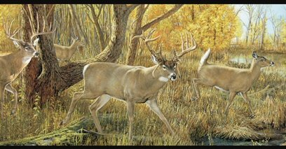 Deer Wallpaper Border