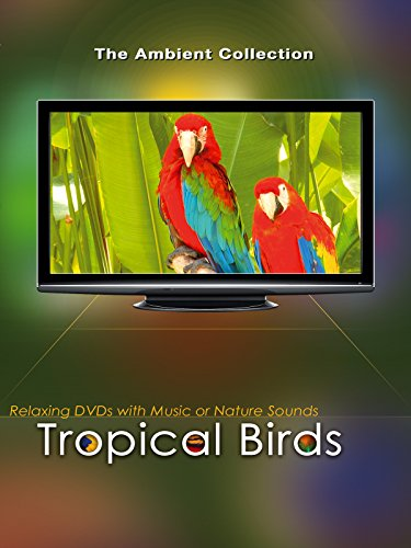 Tropical Birds with Music ()