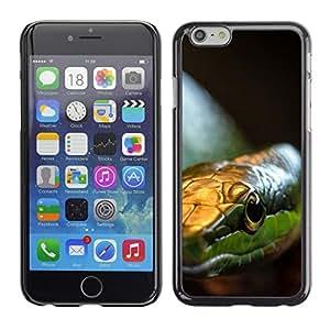 Caucho caso de Shell duro de la cubierta de accesorios de protección BY RAYDREAMMM - Apple Iphone 6 Plus 5.5 - Serpiente Verde