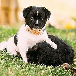 Vanderpump Pets Designer Diamond & Bone Leatherette Collar