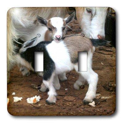 3d Rose 3dRose LLC lsp_1285_2 Pygmy Goat Family, Double T...