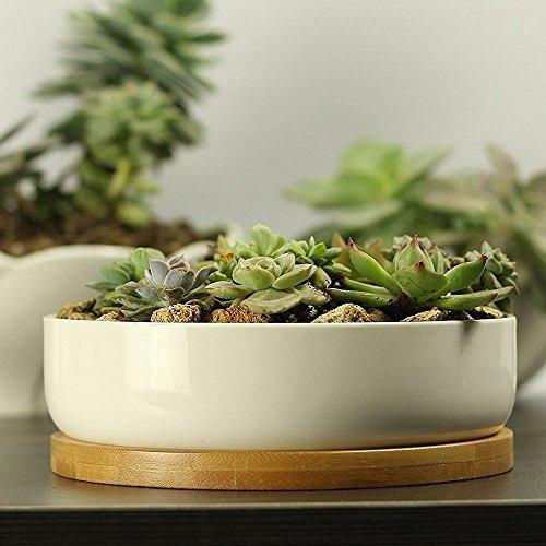 6 Inch Modern White Ceramic Round Succulent Cactus Planter Pot with Drainage Bamboo Tray,Decorative Garden Flower Holder Bowl by Binwen (Image #6)