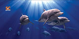"""product image for Sport N Care Marine Towel (Dolphins) Beach Towel 32"""" x 60"""""""