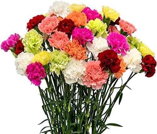 FlowerPrime 50 Assorted Carnations - Fresh Natural Cut Flowers Multiple Colors Choose Your Colors