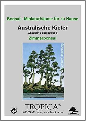TROPICA - Pin australien (Casuarina equisetifolia) - 200 graines- Bonsai
