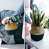 POTEY 710301 Seagrass Plant Basket - Hand Woven
