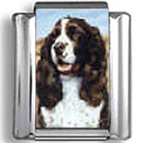 English Springer Spaniel Dog Photo Italian Charm ()