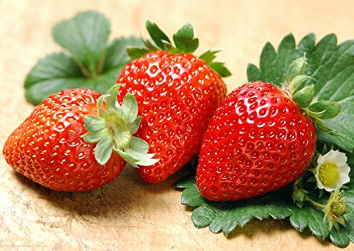 (Albion Everbearing Strawberry 50 Bare Root Plants - New! Extra Large & Sweet)