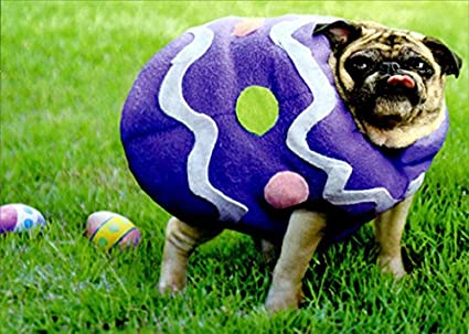 a163a4633e6cd Amazon.com   Pug Easter Egg Funny Dog Easter Card   Office Products