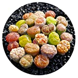 Pack of 4 Live Exotic Lithops Plant Medium Size 2 Years Old Rare Living Stone Seedling Perfect Terrarium Addition