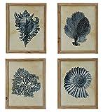 Raz Imports Set of 4 Framed Beach Nautical Sea Shell Prints