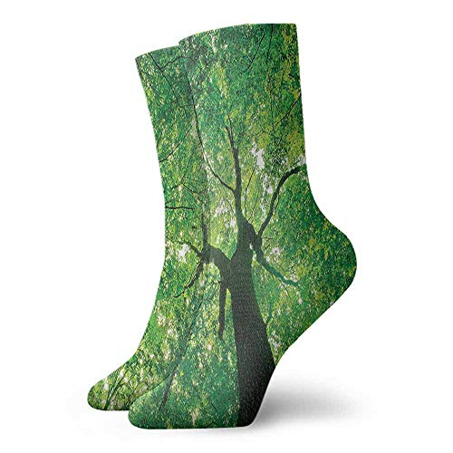 Women Socks Forest,Body of an Evergreen Tree,socks for toddler boys with grip
