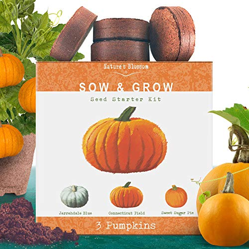 Nature's Blossom Pumpkin Kit. Grow 4 Types of Pumpkins from Seed. Complete Beginners Gardening Starter Set with Organic Pumpkin Seeds, Pots, Soil, Markers, and Guide. Halloween Garden Set (Best Pumpkin Seeds To Plant)