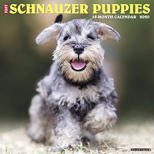 Schnauzer Puppies - Just Schnauzer Puppies 2020 Wall Calendar (Dog Breed Calendar)