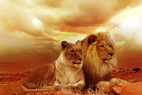 (Home Comforts Peel-n-Stick Poster of Lion Africa Sunset Safari Steppe Landscape Nature Poster 24x16 Adhesive Sticker Poster Print)