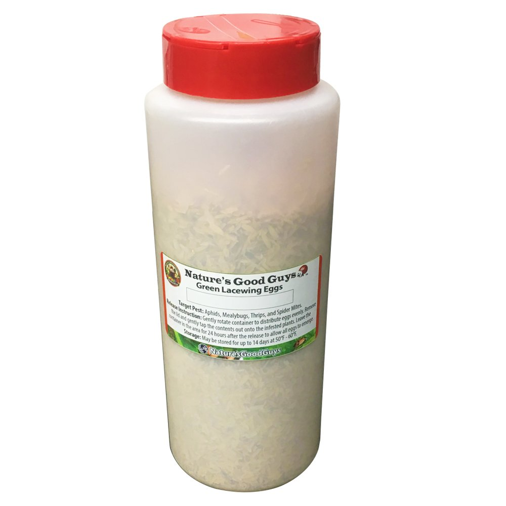 Green Lacewing 50,000 Eggs - Organic Natural Aphid Control