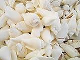 Bulk 4 lbs (400+) White Chulla Chula Shells Seashells Beach Wedding Vase Filling Hobby Crafts