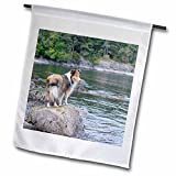 Danita Delimont - Canada - British Columbia, Portland Island. Sheltie on rocks at Arbutus Point - 18 x 27 inch Garden Flag (fl_226866_2) offers