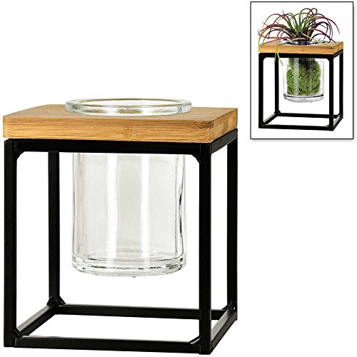 Couronne Co. Classic Pablo Cube Desktop or Hanging Planter Vase/Candle Holder, 5 Inches tall, Black Frame/Clear Glass, M260-201-00