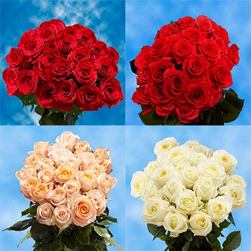 250 Half Red / Half Color Roses Wholesale Perfect for Events by GlobalRose
