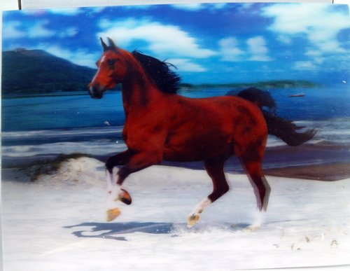 3D Lenticular Stereoscopic Print Paint Picture - Horse Galloping on Beach