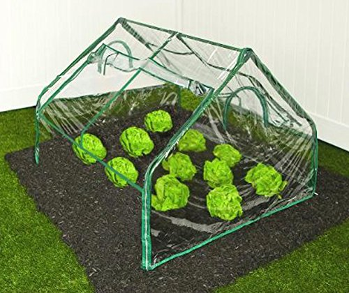 Zenport SH3214A Greenhouse, 4′ by 4′ by 36″