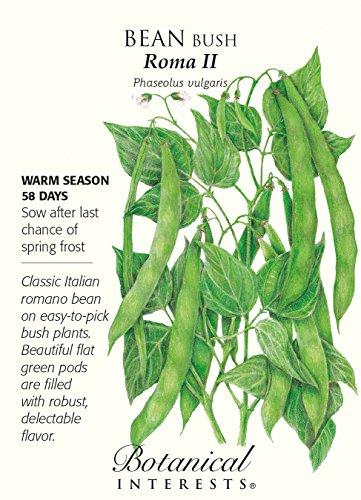 Roma II Bush Bean Seeds - 25 grams