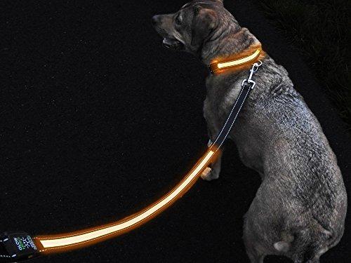 LED Light Dog Leash Visibility