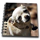 "3dRose db_165640_3 White Chihuahua Posing For Photograph Mini Notepad, 4"" x 4"""