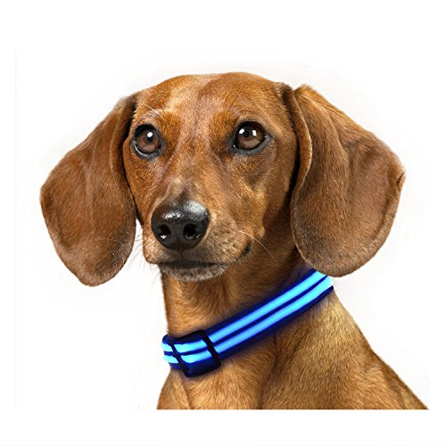 Rechargeable LED Dog Collar, IKET Shiny Double Light Magic Ring to use When Walking Your Dog (M, Blue)