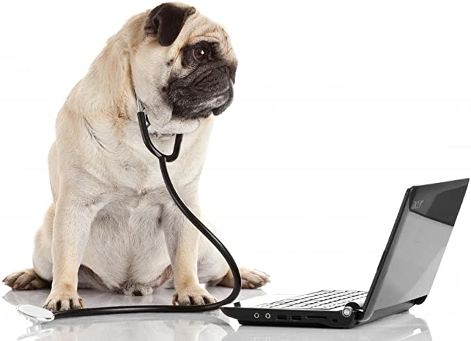 Wallmonkeys Pug Dog With Stethoscope And Laptop Wall Decal Peel And Stick Graphic Wm57712 24 In W X 16 In H Home Kitchen
