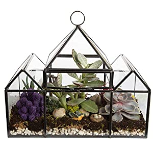 Deco Glass Geometric DIY Terrarium, Succulent & Air Plant – Castle Shaped for Indoor Gardening Decor- Create Your own…