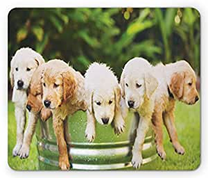 Dog Lover Mouse Pad by Lunarable, Adorable Group of Golden Retriever Puppies in the Yard Spring Friendly Family, Standard Size Rectangle Non-Slip Rubber Mousepad, Multicolor