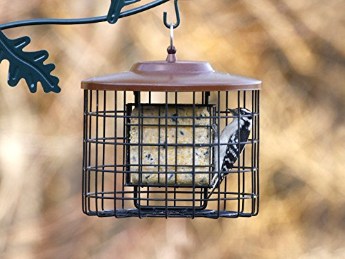 Stokes-Select-Squirrel-Proof-Bird-Feeder-Caged-Bird-Feeder-2-Suet-Cake-Capacity-Metal-Roof-10-Inch-Diameter