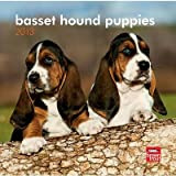 (7x7) Basset Hound Puppies - 2013 Mini Calendar