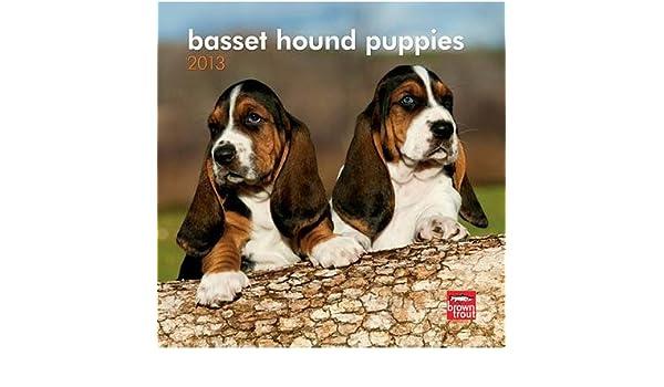 Amazoncom 7x7 Basset Hound Puppies 2013 Mini Calendar Prints