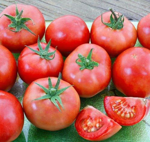 porter tomato - 3