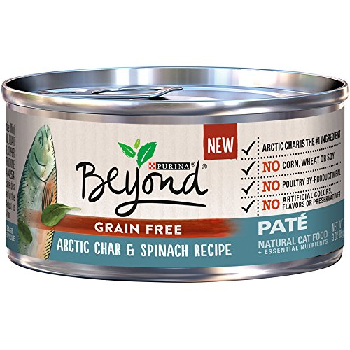 Purina Beyond Cat Food Review Everything You Need To Know