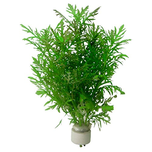 Buy Aquarium Plants Factory products online in Oman - Muscat