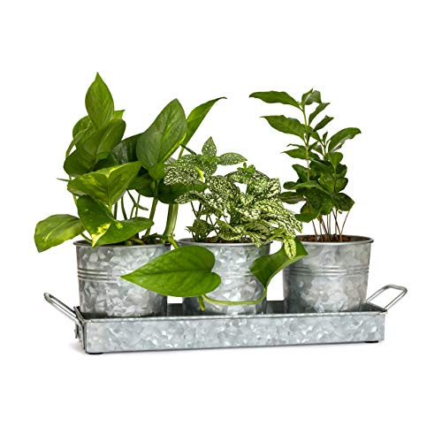 Planter Lawn (Farmhouse Flower Pot and Tray Set By Walford Home - Vintage Galvanized Windowsill Planter - Rustic Multi-use Caddy Indoor or Outdoor - Kitchen Craft Caddy Succulent Herb Planters)