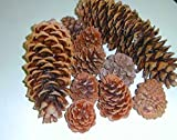 1 Pound Assorted Real Natural Pine Cones