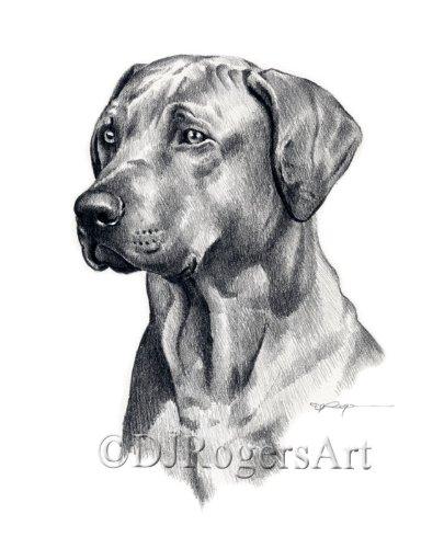 - Rhodesian Ridgeback Pencil Drawing Art Print by Artist DJ Rogers