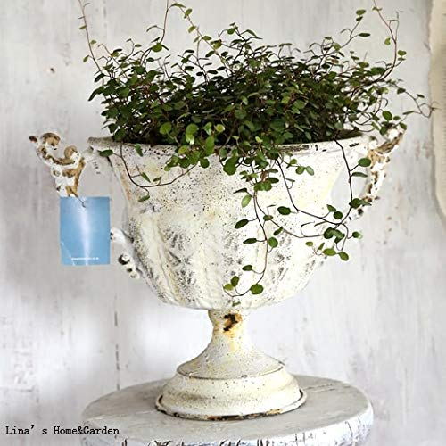 Fotcus - rustic retro beautiful hand painated metal urn planter idea