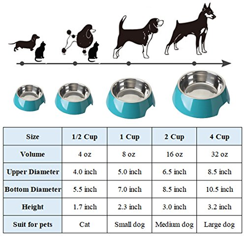 Mainstreet Dog Bowls Stainless Steel Bamboo Fiber Water and Food Feeder with Stand Animal Pet Food Holder Eco-Friendly for Dogs Cats (Blue, Medium) by Mainstreet (Image #2)