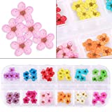 2 Boxes Dried Flowers for Nail Art, KISSBUTY 24