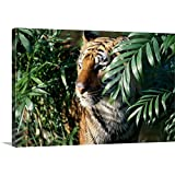 Canvas On Demand Premium Thick-Wrap Canvas Wall Art Print Entitled Close-up of a Bengal Tiger ((Panthera Tigris)