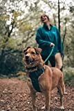 Embark Adventure Harness for Dogs, Easy On and